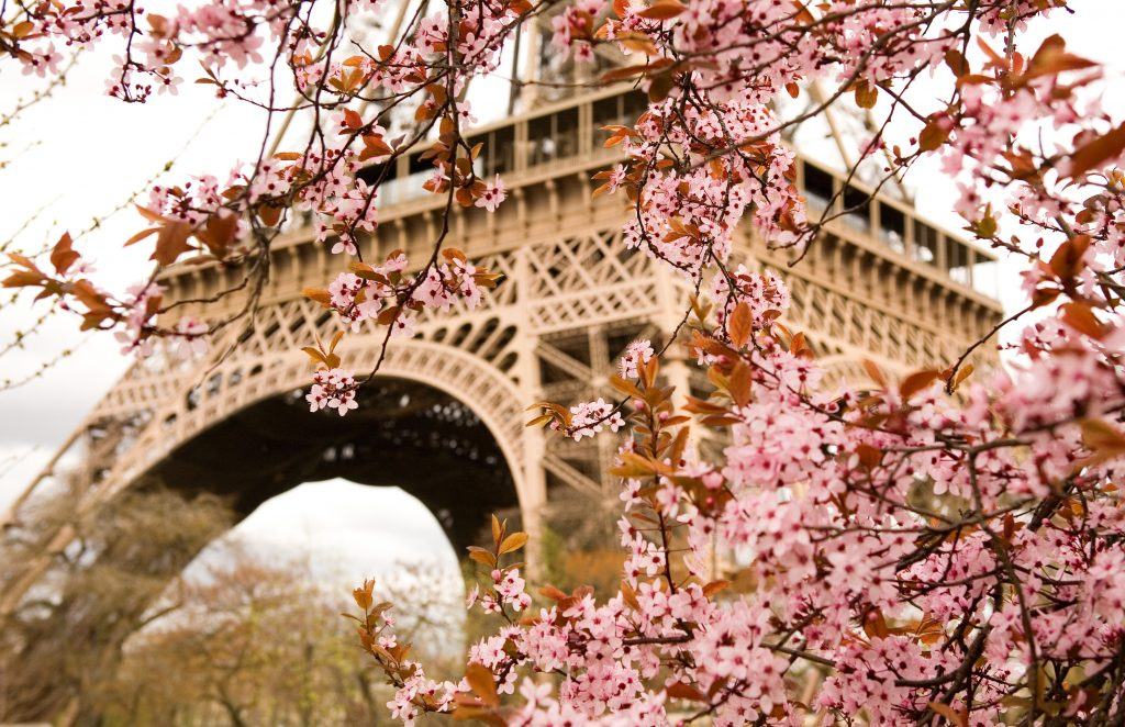 cherry blossoms blooming in front of eiffel tower in sprin, one of the best things to see in paris france