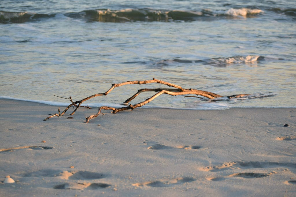 Stick of driftwood washed ashore on a North Carolina beach at golden hour