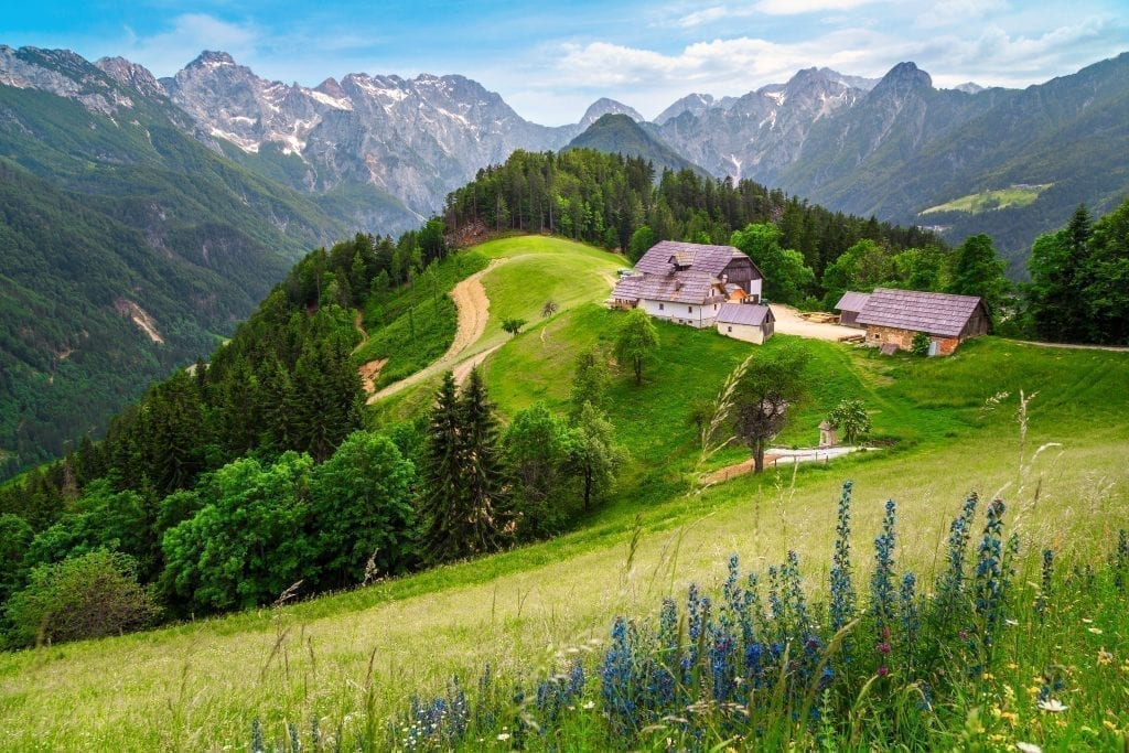 Logar Valley in Slovenia with blue flowers visible in the foreground, peaks of the alpsin the background, and two small houses in the center right of the photo