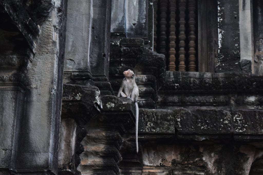 Cambodia Travel Budget: Monkey at Angkor Wat
