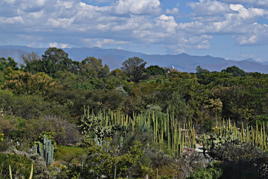 Things to Do in Oaxaca