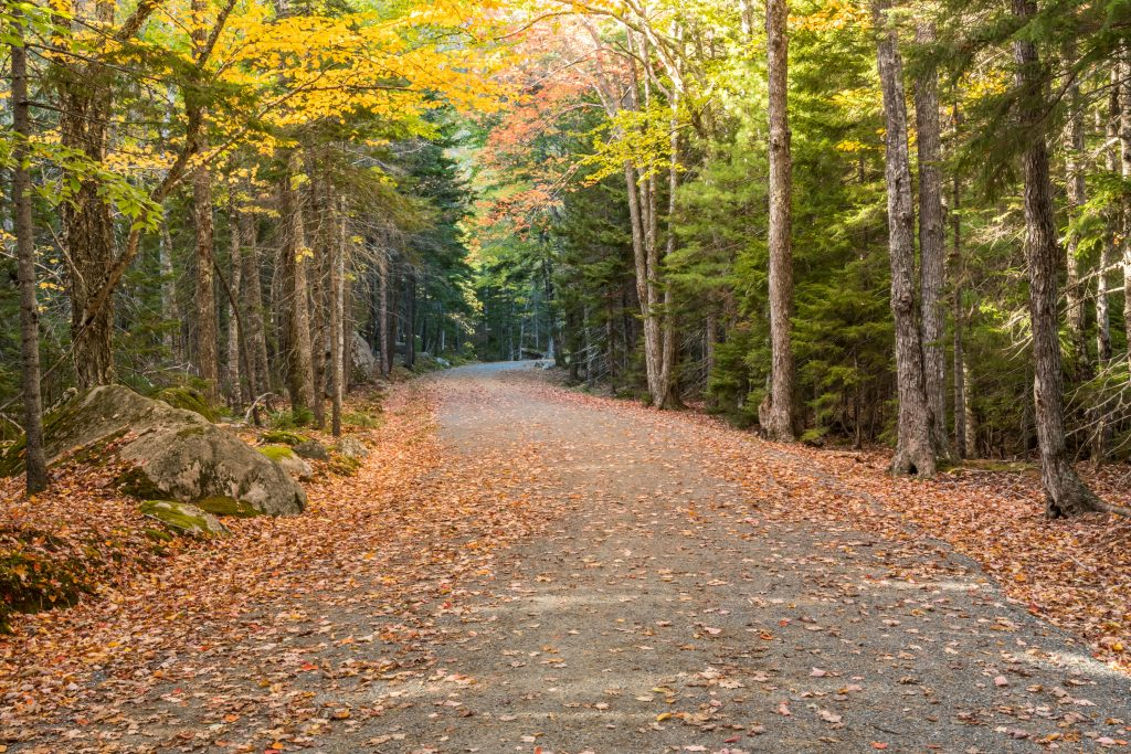 empty carriage road in acadia np at the beginning on the fall foliage season