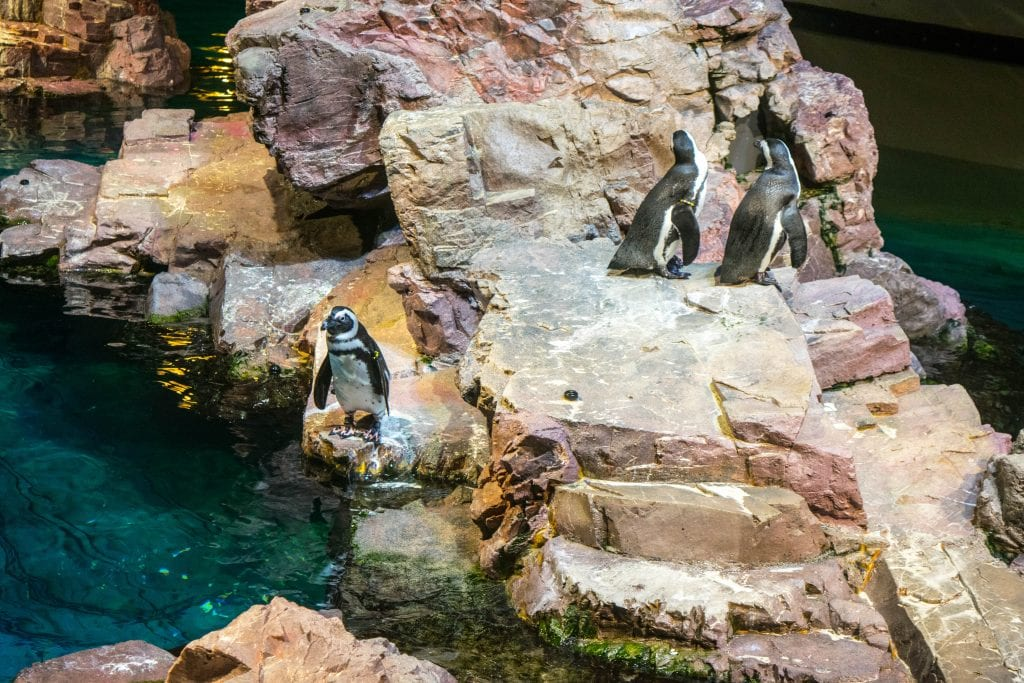 2 Days in Boston Itinerary: Penguins at Aquarium