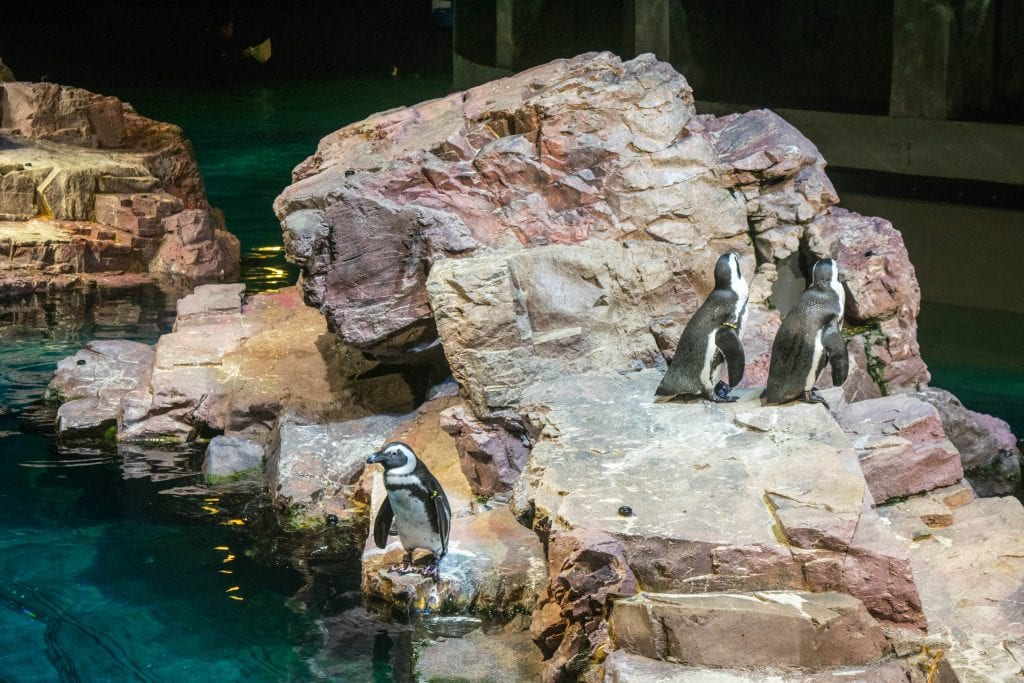 Things to Do in Boston: New England Aquarium