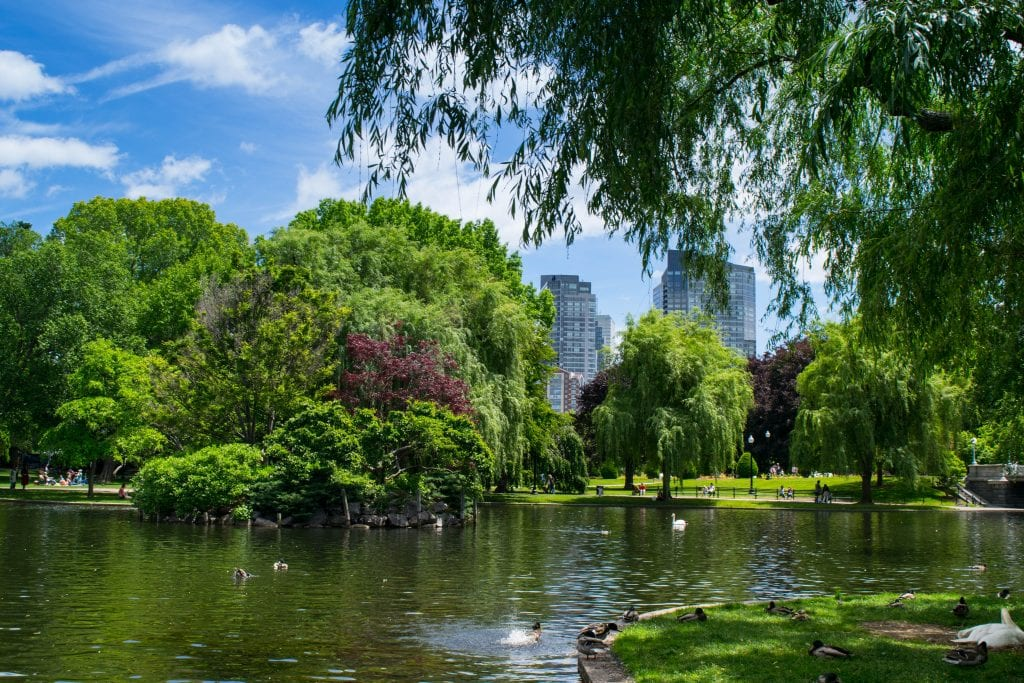 Pond in the Boston Public Garden with skyscrapers in the distance, one of the fun things to do in Boston MA