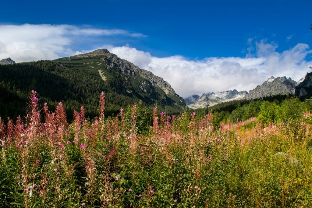Hiking in the High Tatras of Slovakia: Wildflowers