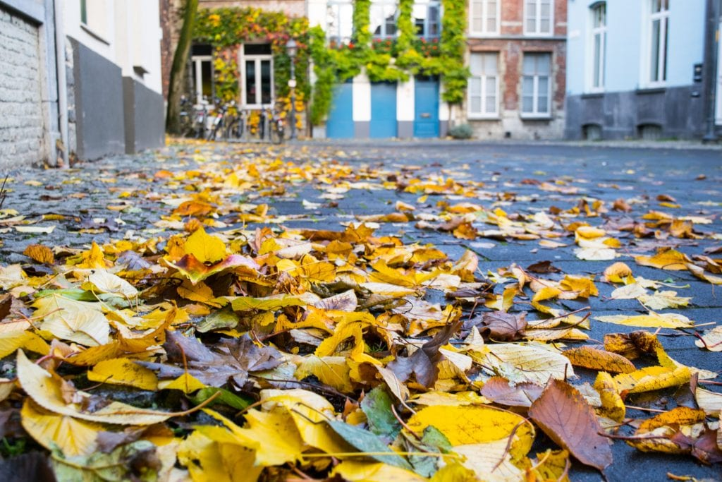 Fallen leaves gathered on a street in Ghent Belgium.