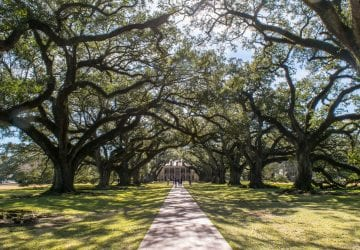 3 Days in New Orleans Itinerary: Oak Alley Plantation