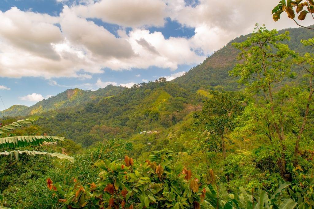 Jungle near Minca, Colombia