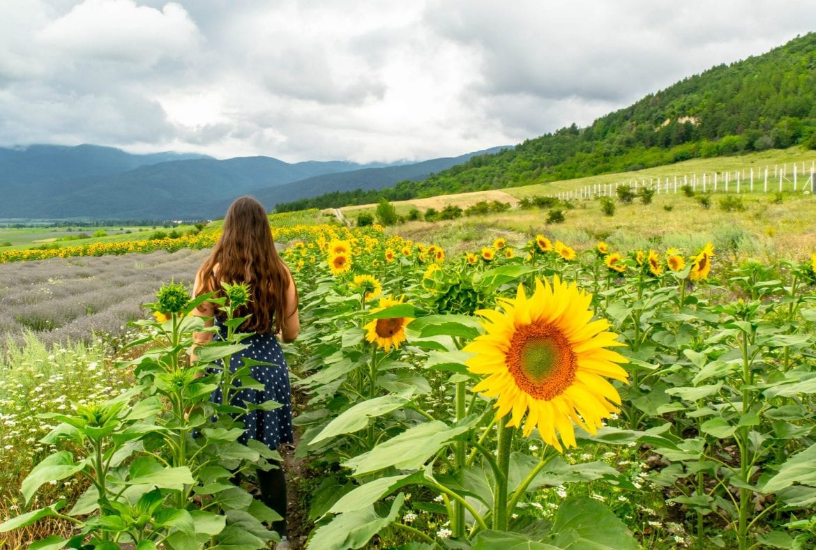 Sunflowers in Bulgaria with Girl