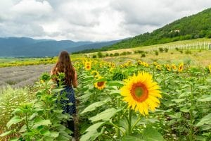 Kate Storm standing surrounded by Sunflowers in Bulgaria