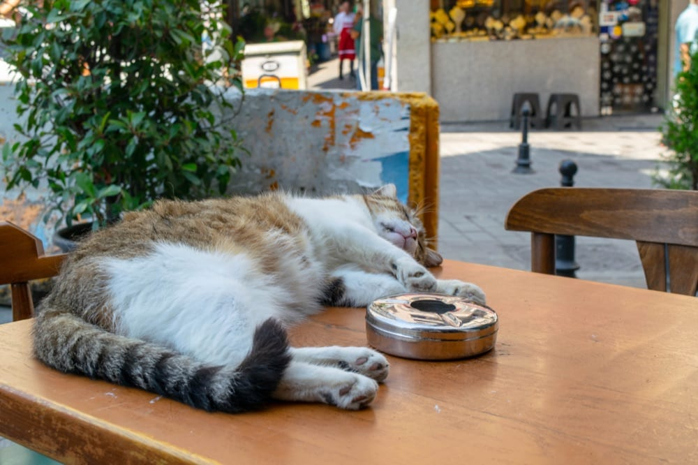Fun Things to Do in Istanbul: Napping Cat