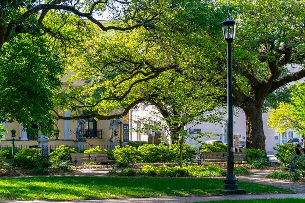 What to Do in Savannah: Oak Trees