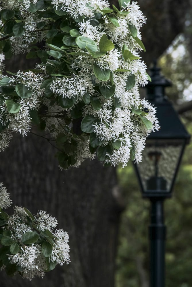 The Best Things to Do in Savannah: Flowers