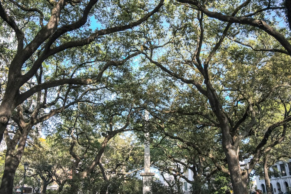 The Best Things to Do in Savannah: view of trees