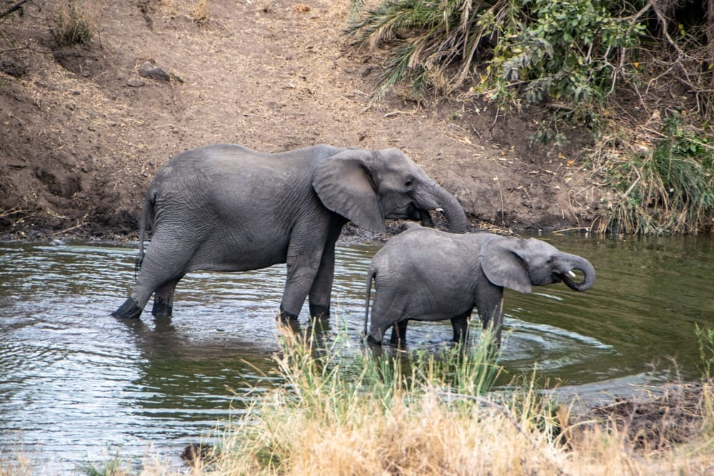 two elephants drinking in a watering hole kruger south africa itinerary