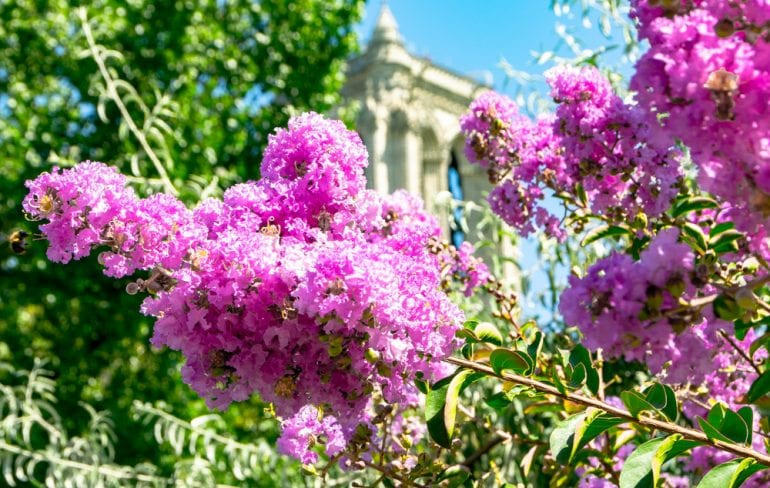 Honeymoon in Paris: Flowers near Notre Dame