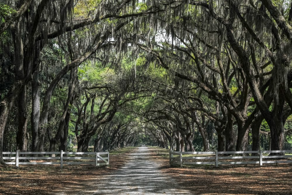Best Things to Do in Savannah: Wormsloe Plantation