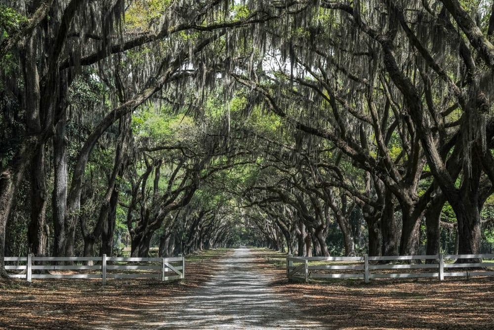 Best Things to Do in Savannah: Wormsloe Plantation