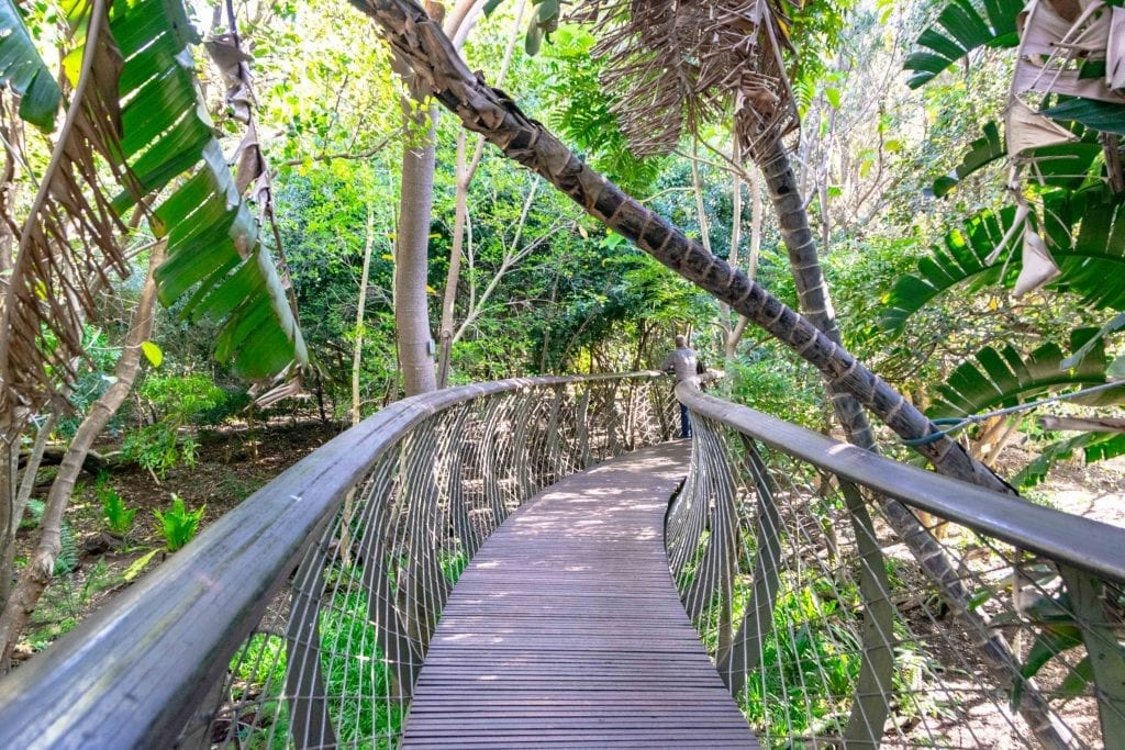 2 Weeks in South Africa Itinerary: Boomslang at Kirstenbosch Botanical Gardens