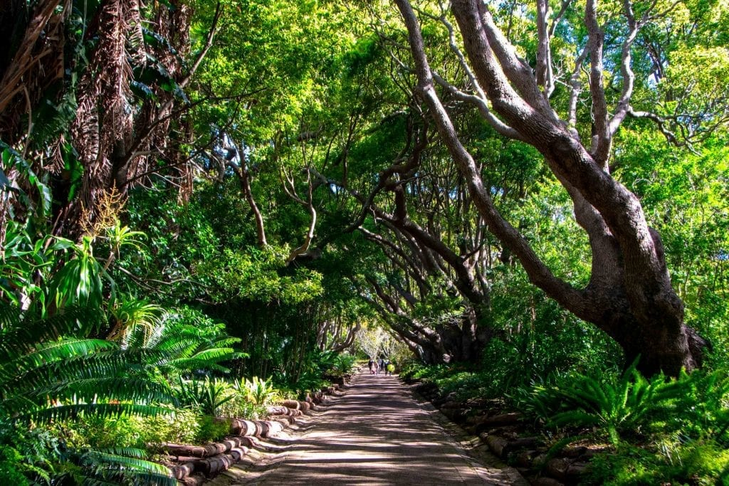 2 Weeks in South Africa Itinerary: Tunnel of Trees