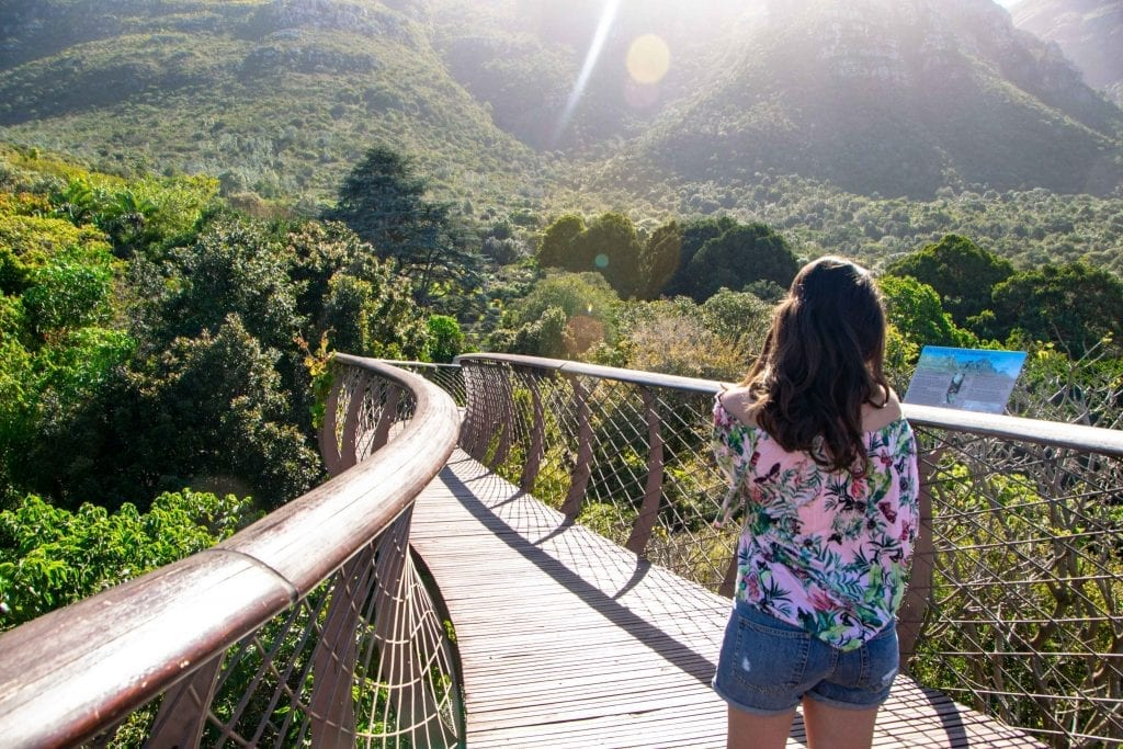 3 Day Cape Town Itinerary: Kirstenbosch Gardens Boomslang
