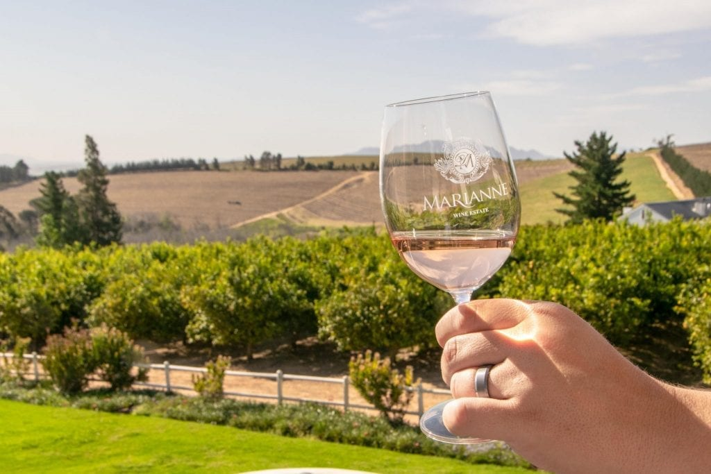 glass of wine being held in front of a vineyard during an itinerary south africa 14 days