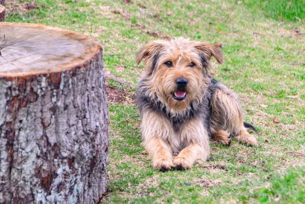 2 Week South Africa Itinerary: Cute Dog on Garden Route