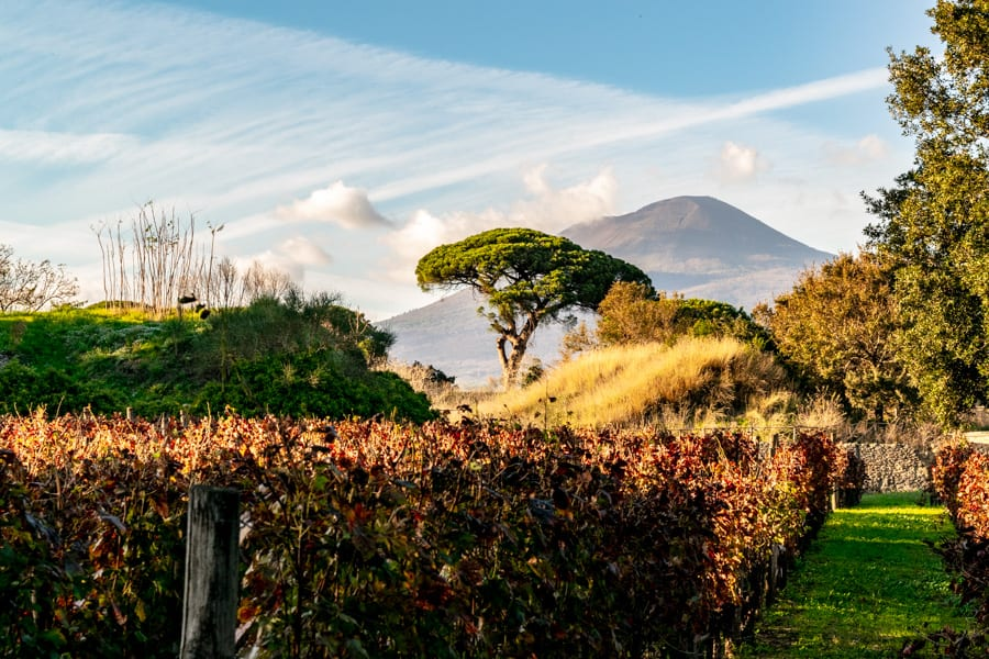 Visiting Pompeii and Mount Vesuvius: Mount Vesuvius and Vineyard