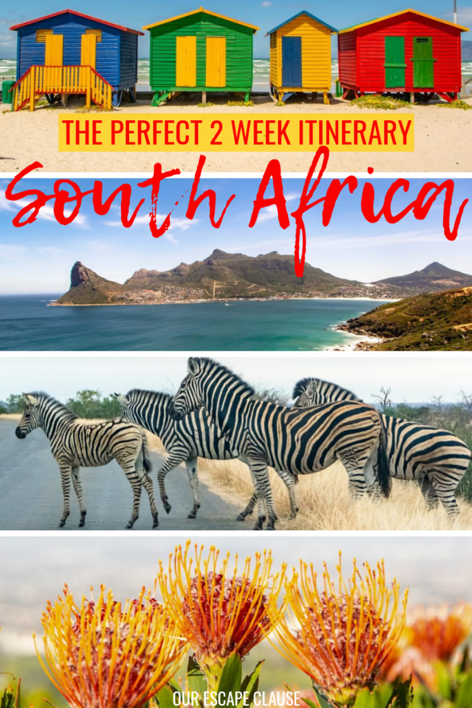 The Ultimate 2 Week South Africa Itinerary: where to go, what to do, and what to bring! #southafrica #africa #travelafrica #safari #capetown