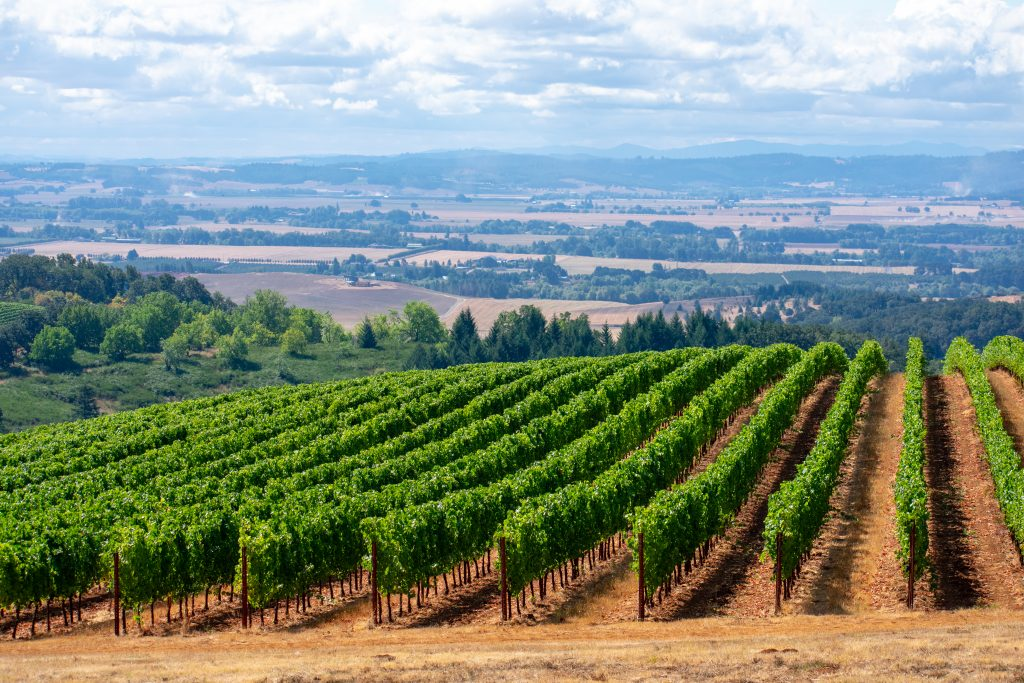 grape vines in willamette valley oregon, one of the best usa couples vacation spots