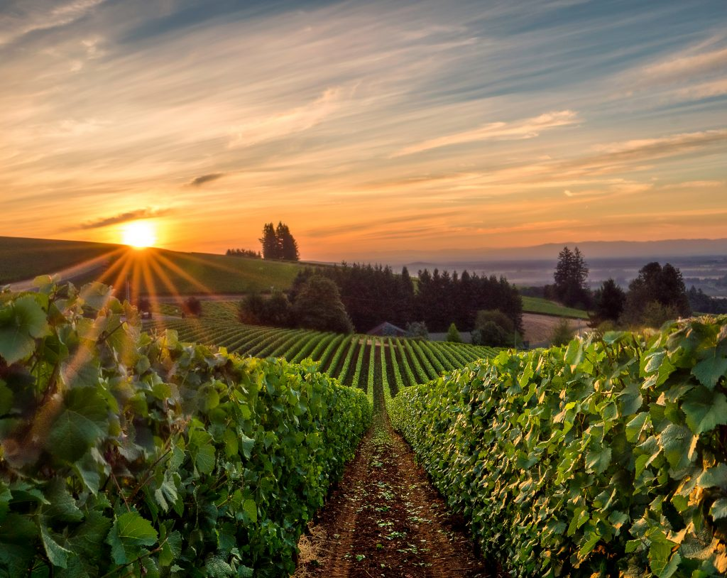 wineries in willamette valley at sunset