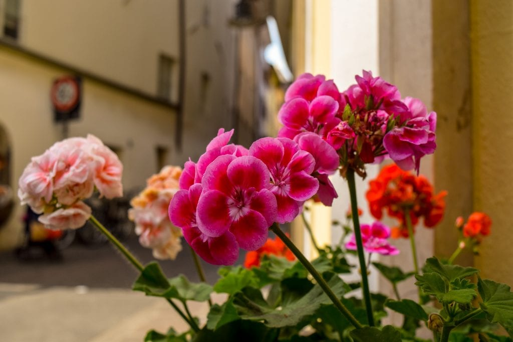 Best Things to Do in Bolzano: Flowers