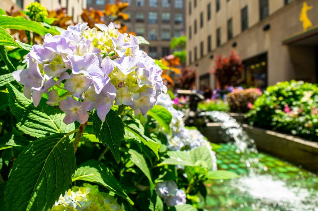 4 Days in New York Itinerary: Flowers in Rockefeller Plaza