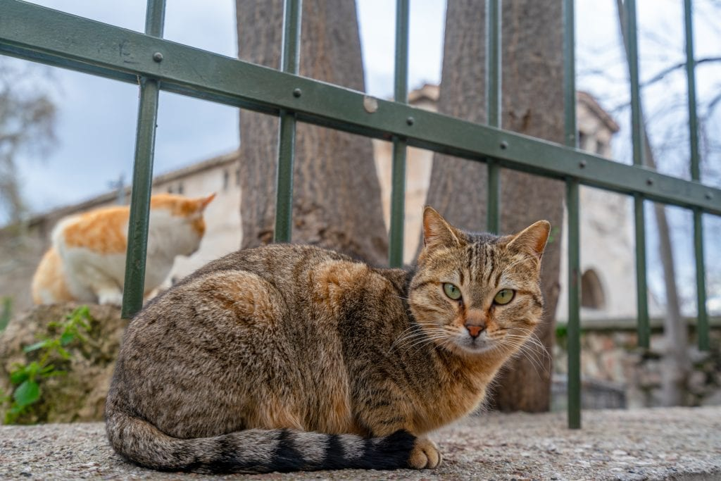 Close up of cat in Athens, 2 days in Athens itinerary