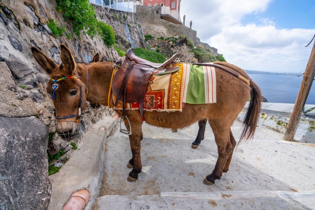 Donkey on Santorini, Santorini Honeymoon
