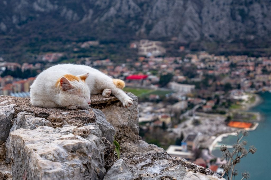 Cat Sleeping on Fortress, What to Do in Kotor Montenegro