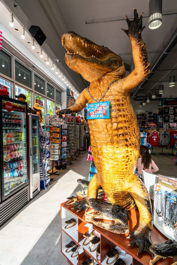 Stuffed alligator standing in a souvenir shop in Miami Beach.