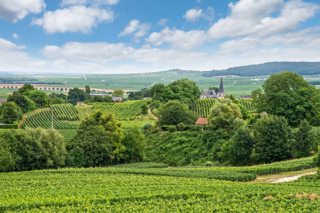 vineyards of the champagne region in france, one of the best road trips in france