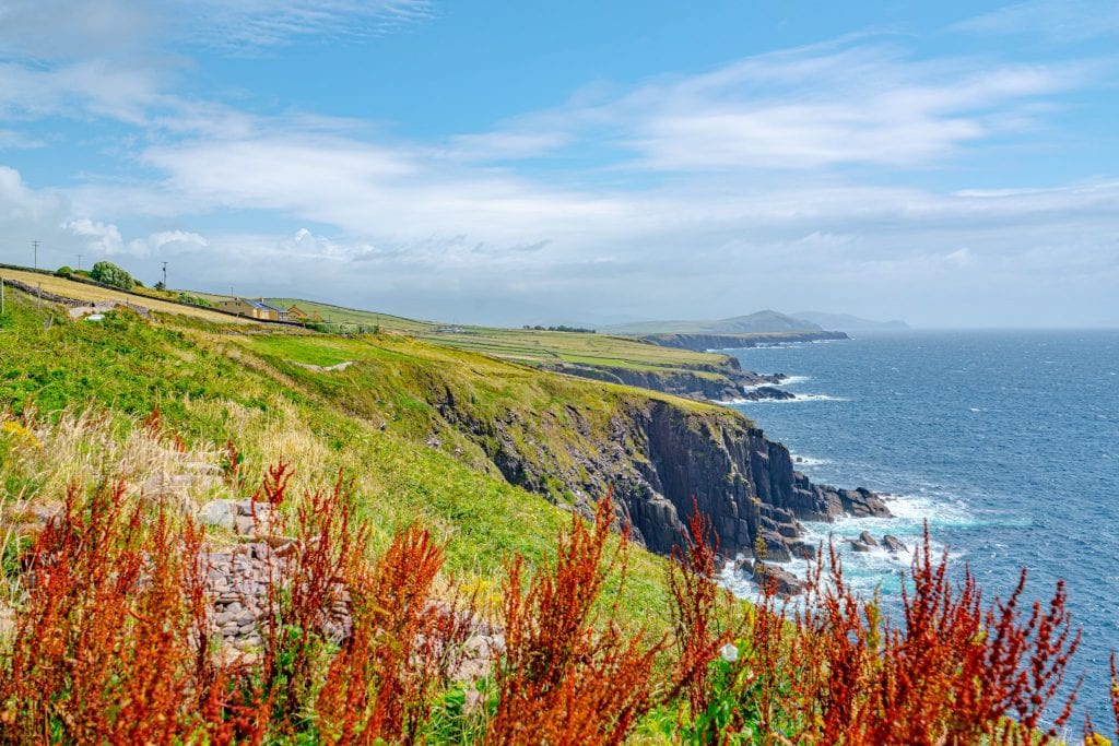 Coast of Slea Head Drive on the Dingle Peninsula with red flowers in the foreground