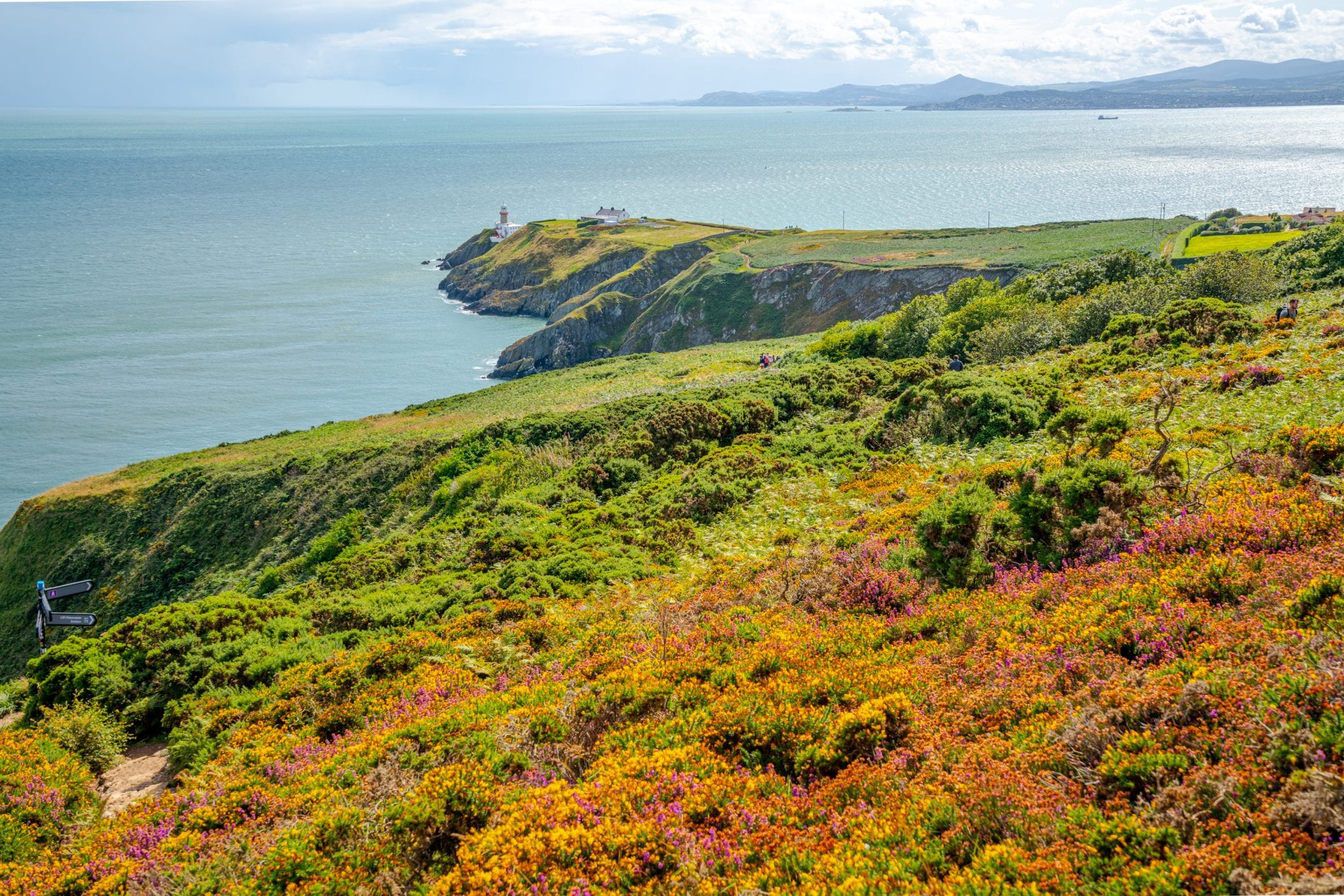 Howth Cliff Walk in Ireland, a fun bonus stop for your 10 day Ireland road trip itinerary. Wildflowers are in the foreground and a lighthouse in the background.