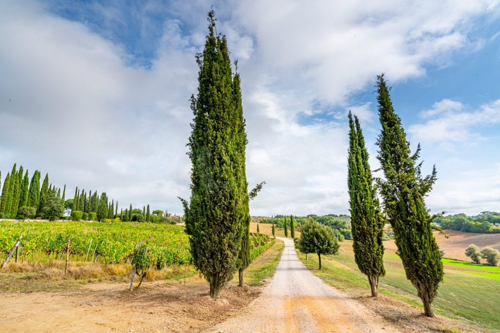 Small Tuscan country road lined by trees--roads like this are one of the benefits of taking epic day trips from Florence!