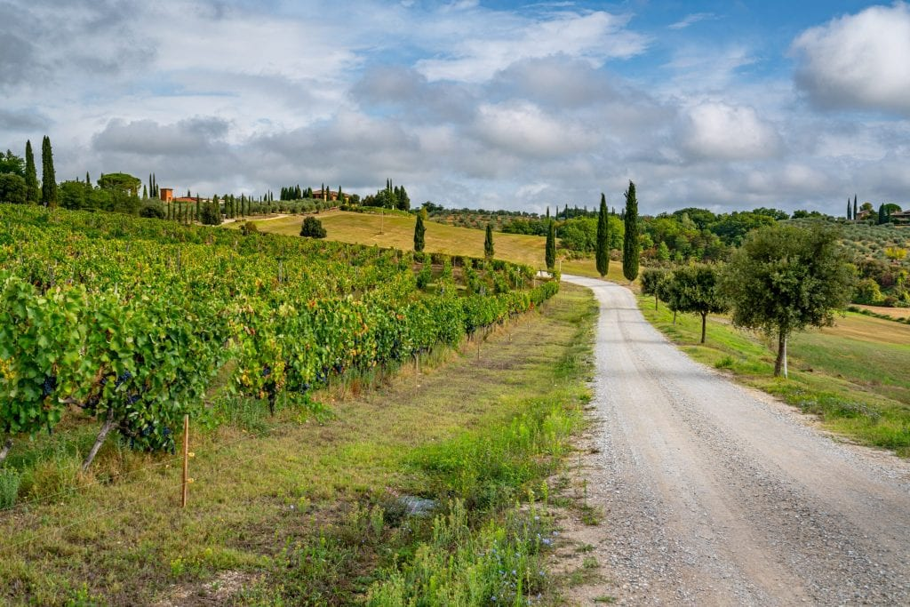 Small Gravel road in the Tuscan countryside with a vineyard to one side--this Tuscany travel blog post will help you plan the ultimate Tuscany road trip itinerary!