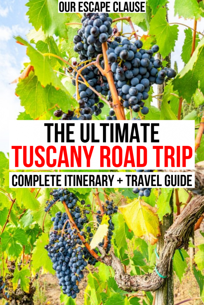 "Photo of dark purple grapes hanging on vines in Tuscany. Black and red text on a white background reads ""The Ultimate Tuscany Road Trip Itinerary + Travel Guide"""