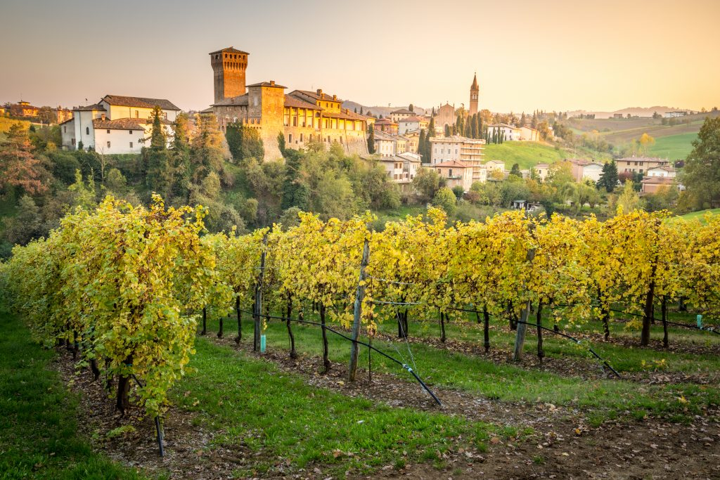 small town modena italy as seen across a vineyard with grape vines in the foreground