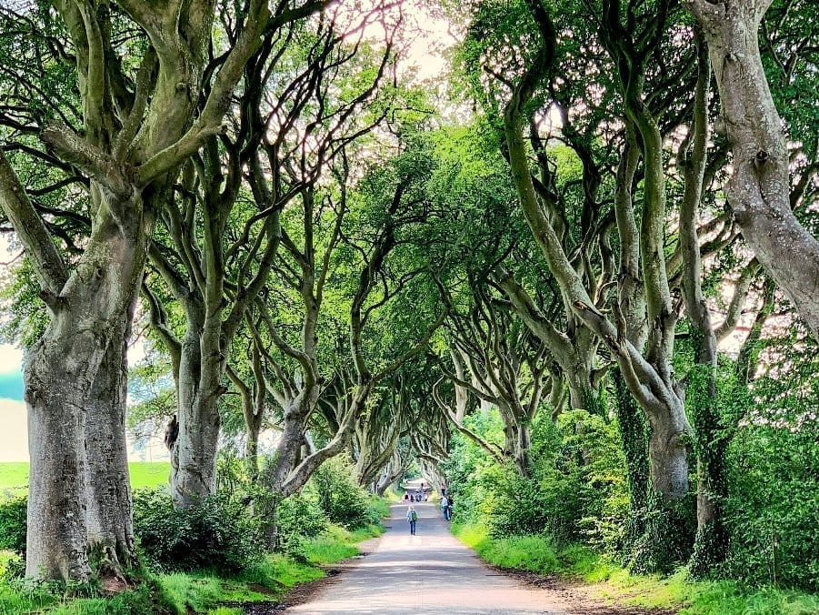 Dark Hedges as seen when driving through Northern Ireland, one of the best European road trips!