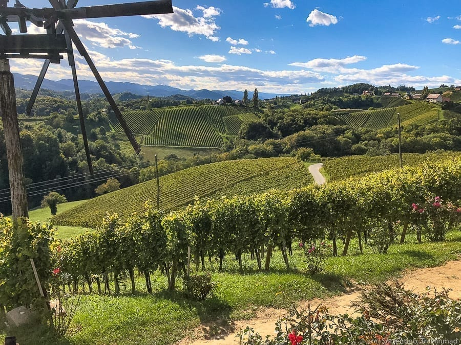 Vineyard with hundreds of grape vines planted on a rolling hill with a windmill on the foreground on the left side of the photo in Austria