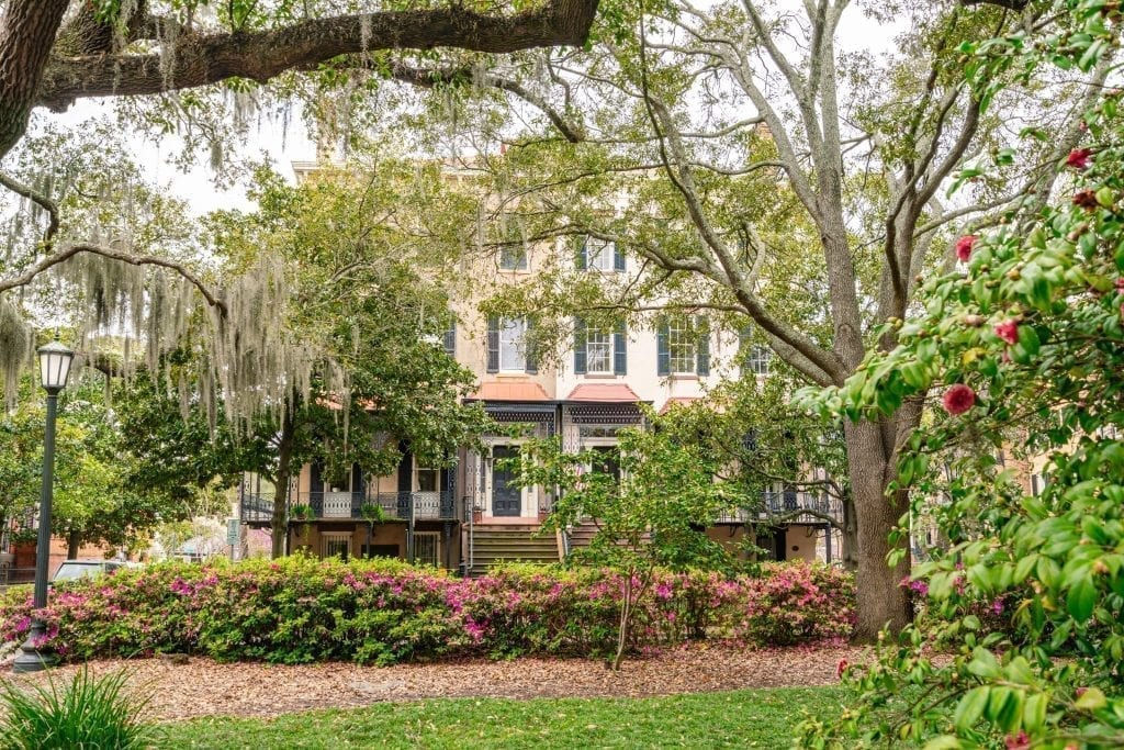 Houses in the background of the shot with trees and flowers in the foregroun as seen in a Savannah GA town square
