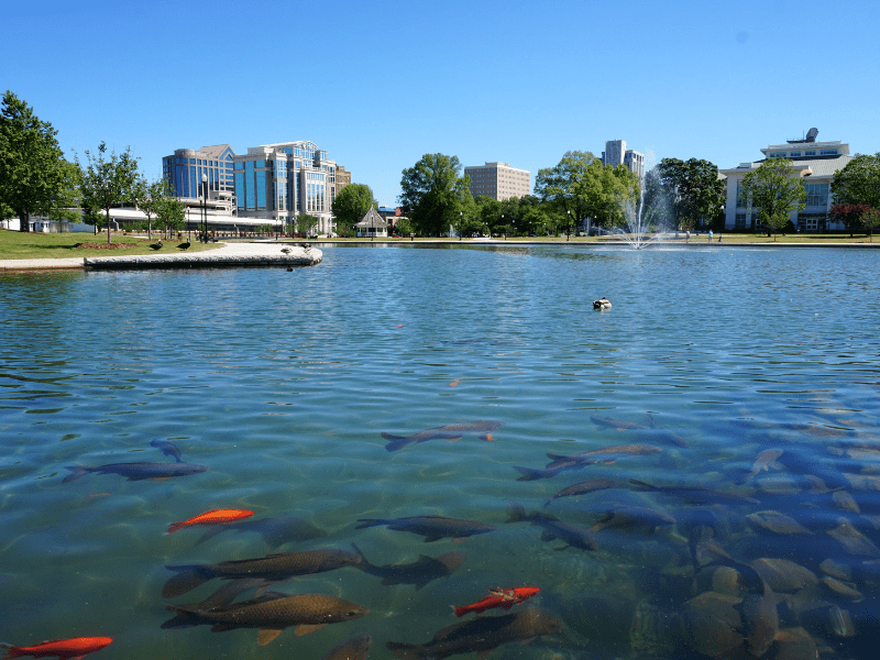 View of Huntsville Alabama from across the lake with fish in the foreground