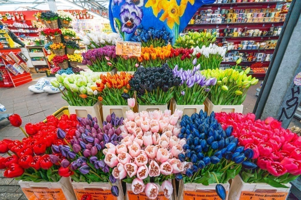Tulips on display at the Floating Flower Market, as seen during a day in Amsterdam